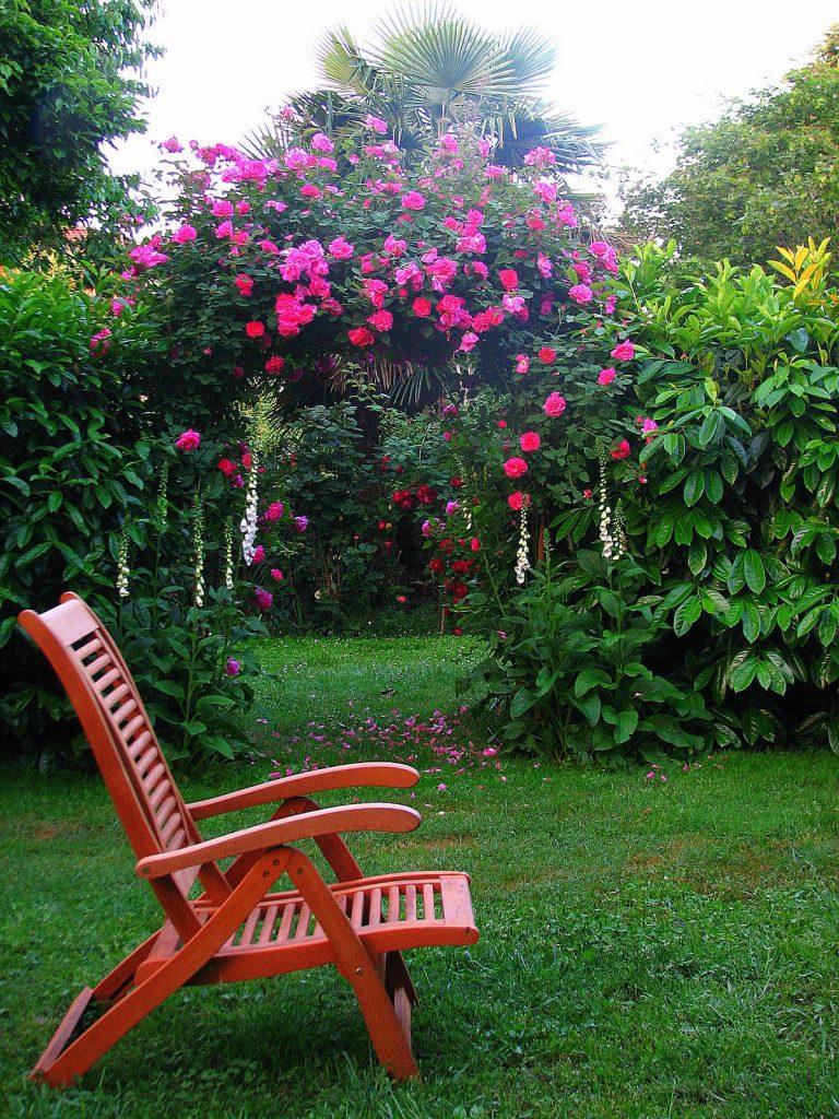 Rose Rampicanti Senza Spine zephirine drouhin, la rosa senza spine. – giardinicoli